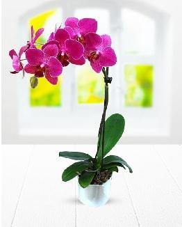 Tek dallı mor orkide  Bursa güvenli kaliteli hızlı çiçek