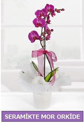 Seramik içerisinde birinci kalite tek dallı mor orkide  Bursa hediye sevgilime hediye çiçek