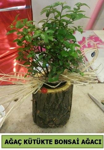 Doğal ağaç kütük içerisinde bonsai ağacı  Bursa çiçek online çiçek siparişi