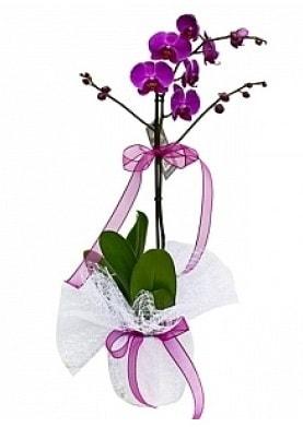 Tekli Mor Orkide  Bursa çiçek servisi , çiçekçi adresleri