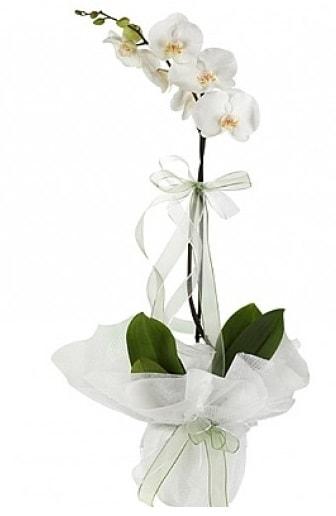 Tekli Beyaz Orkide  Bursa çiçek yolla , çiçek gönder , çiçekçi