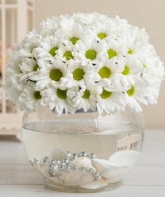 Fanusta beyaz Papatya  Bursa güvenli kaliteli hızlı çiçek