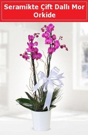 Seramikte Çift Dallı Mor Orkide  Bursa internetten çiçek satışı